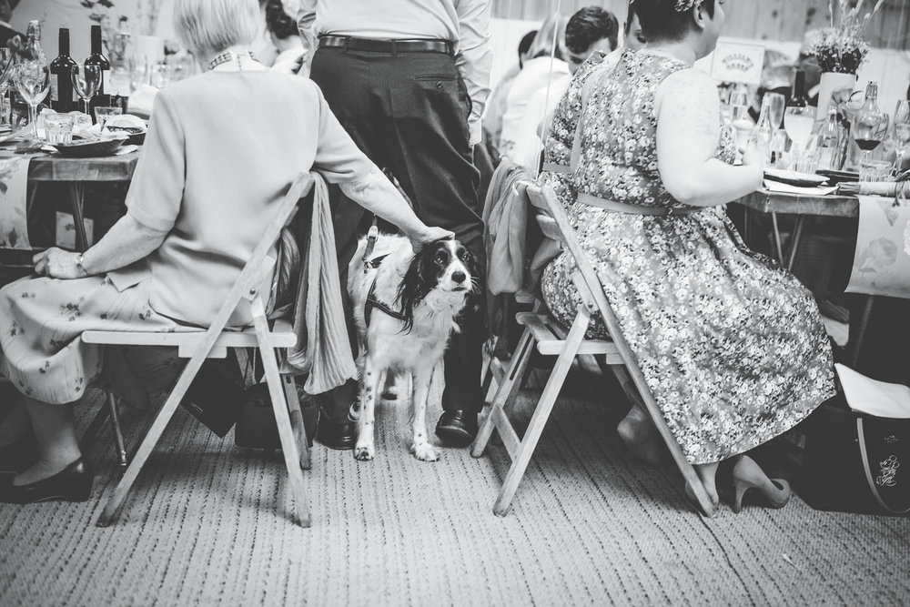 The bride and grooms dog, Documentary wedding photographer.