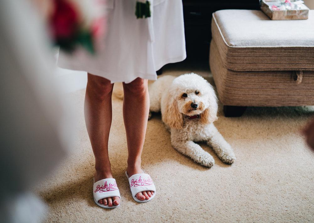 The brides dog is ready and waiting, Lancashire wedding.
