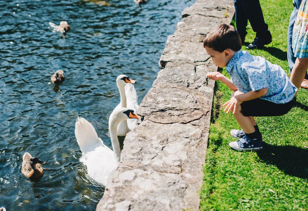 feeding the swans - lake district wedding photographer