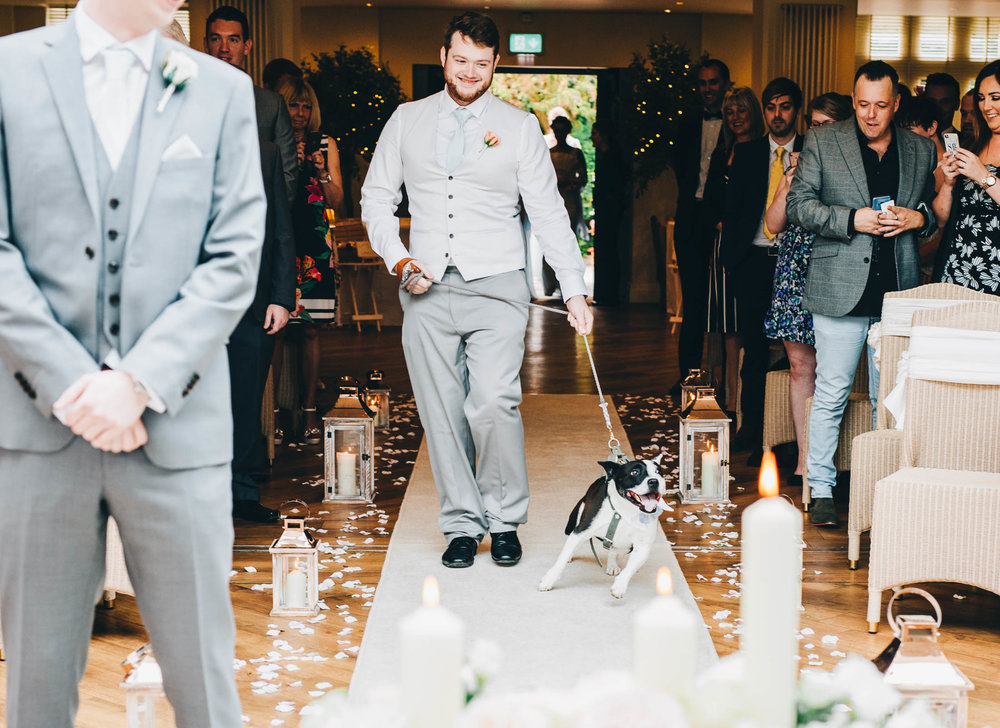 The family dog walking down the aisle. Summer wedding.