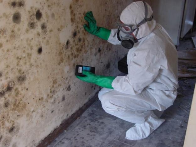 fullerton-mold-remediation.jpg
