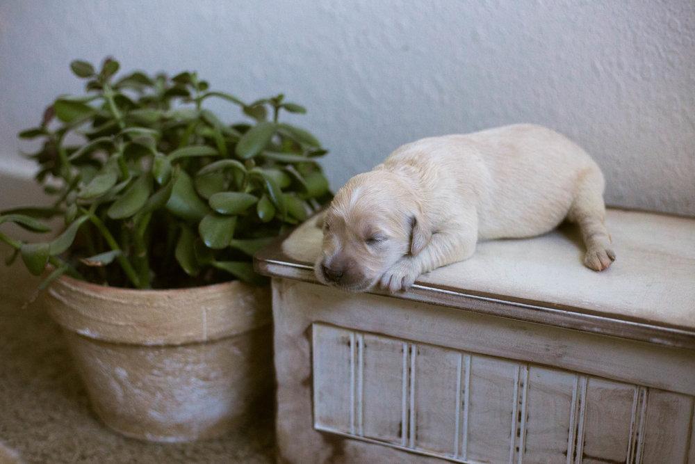 Puppies_1week-5.jpg