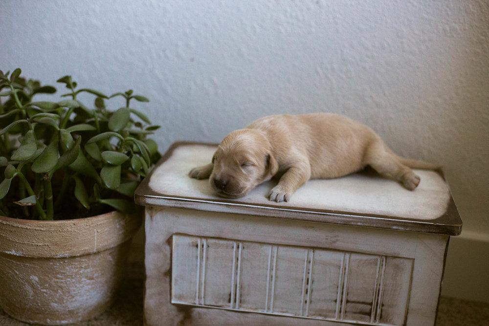 Puppies_1week-6.jpg