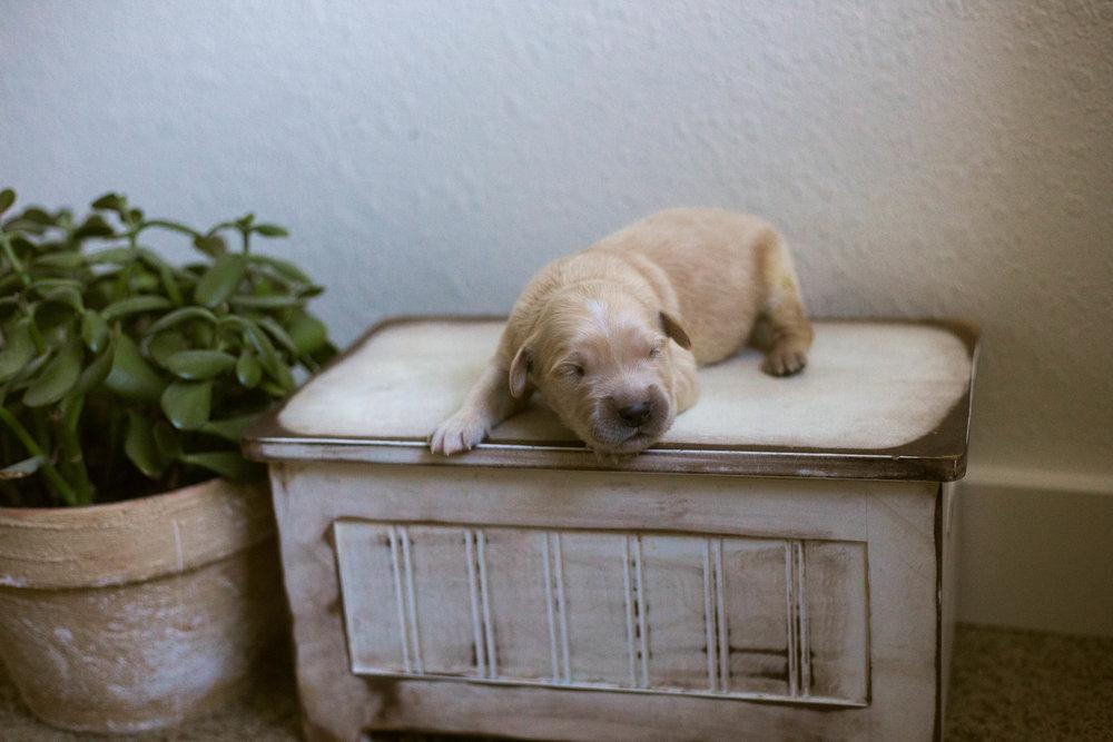 Puppies_1week-7.jpg
