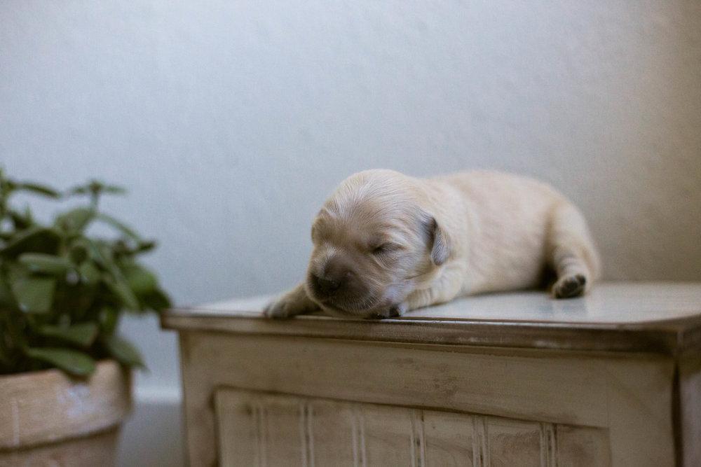 Puppies_1week.jpg