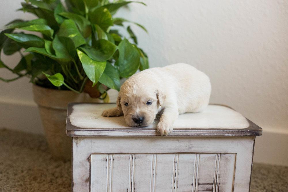 Puppies_2week-05.jpg