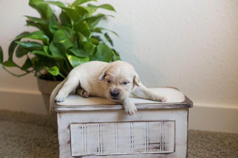 Puppies_2week-06.jpg