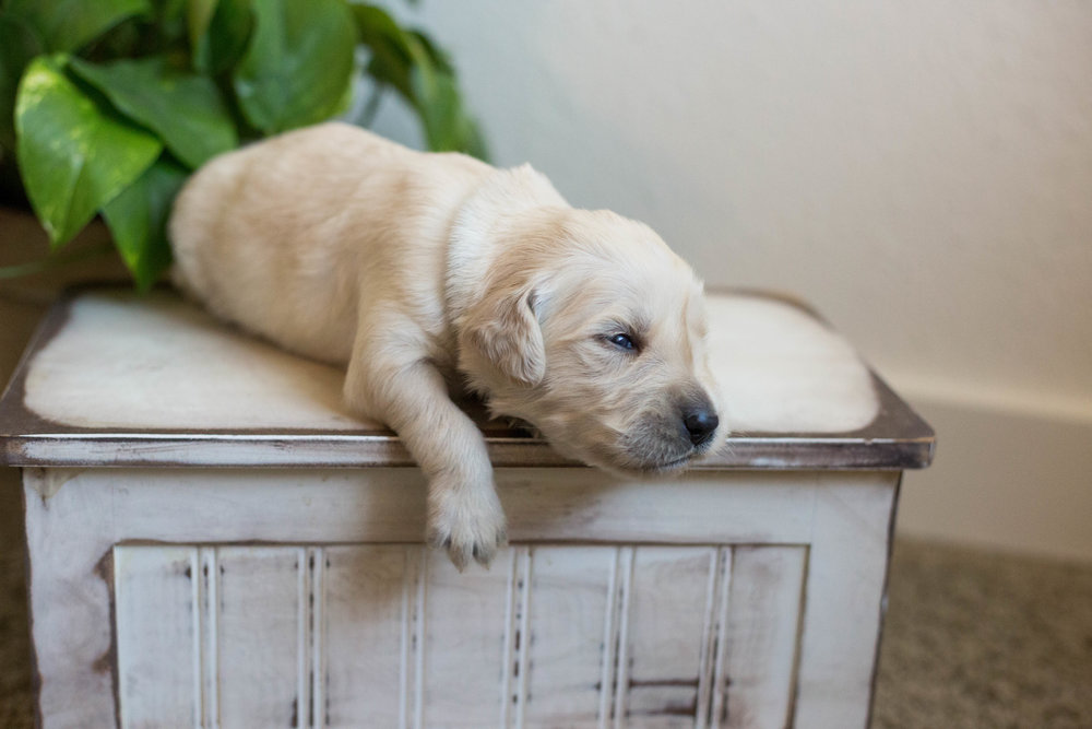 Puppies_2week-08.jpg
