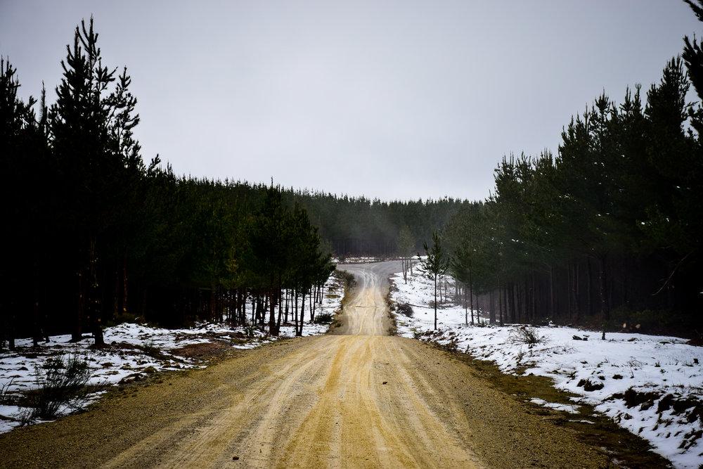 snow-50.jpg