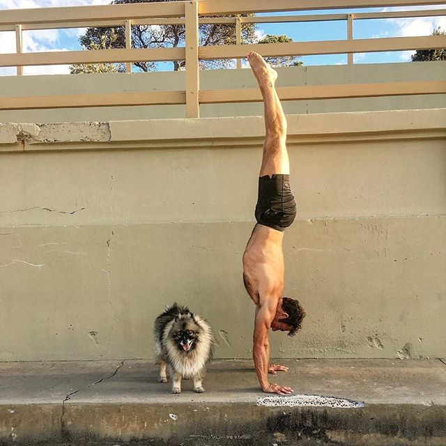 These two will be leading the November #sweatforthegoodstuff sesh at @thegrounds! ⠀⠀⠀⠀⠀⠀⠀⠀ ⠀⠀⠀⠀⠀⠀⠀⠀⠀ OKKKKK 😝... so I lie, Lyra 🐶 already has prior engagements, but, @christianralston will be there taking the lead! He's got a playful, energetic flow planned + lots of good tunes to kick off the silly season! ⠀⠀⠀⠀⠀⠀⠀⠀⠀ ⠀⠀⠀⠀⠀⠀⠀⠀⠀ Details for both the October (Tuesday 23) and November (Tuesday 27) sessions at @thegrounds are in our bio! Tap the link for more ✌🏽⠀⠀⠀⠀⠀⠀⠀⠀⠀ ⠀⠀⠀⠀⠀⠀⠀⠀⠀ 📸: @christianralston #sweatforthegoodstuff #thegrounds #lovesweats #community #yoga #meditation #mindfulness