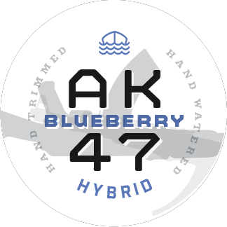 Blueberry AK47 Hybrid