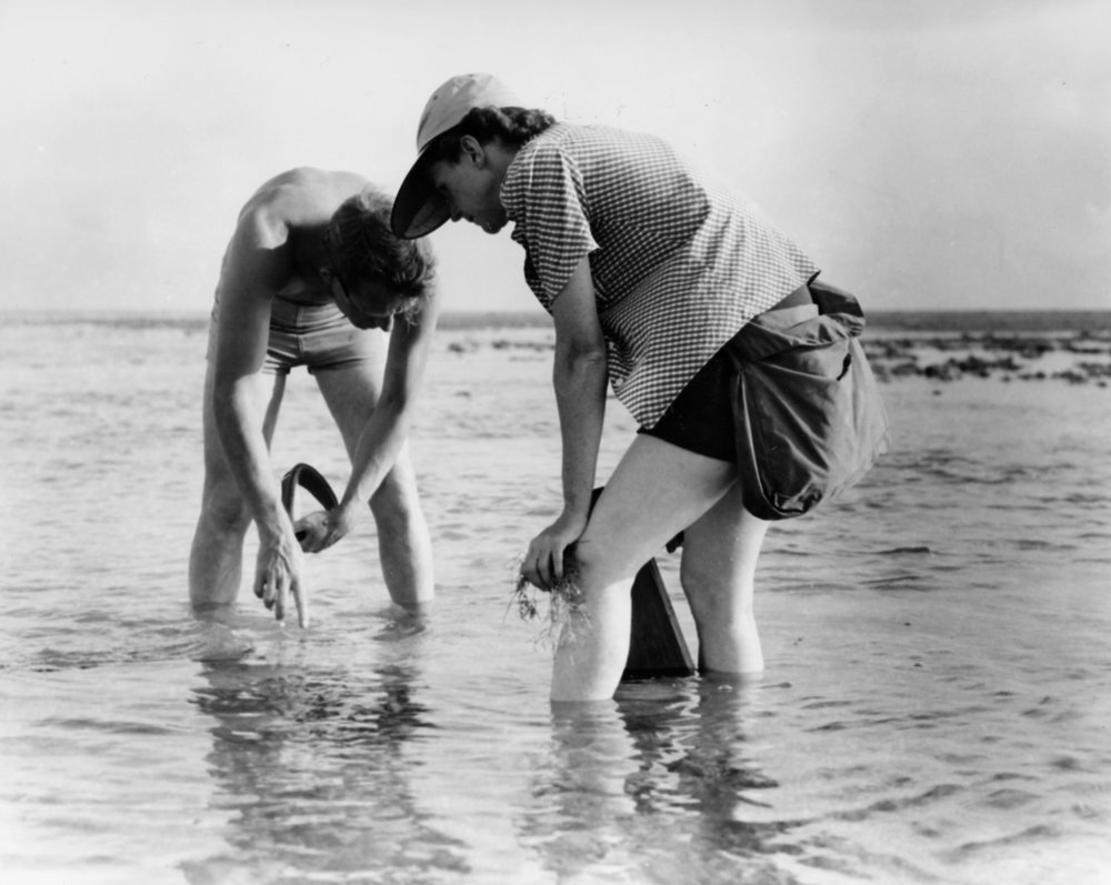 Carson conducting marine biology field research in the Atlantic in 1952. Source: US Fish and Wildlife Service via Wikimedia Commons