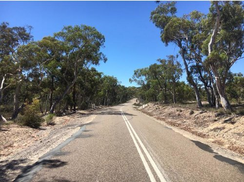 Expect classic dry Australian bush scenery on day 5