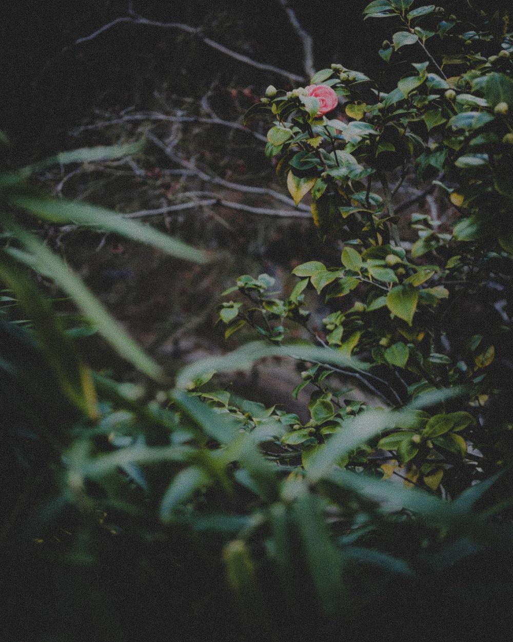 WA-Jardin-5276.jpg