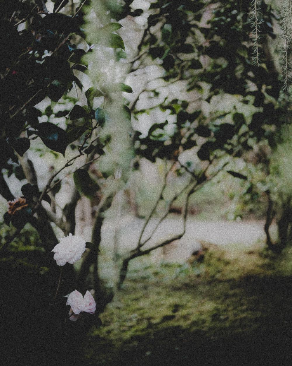 WA-Jardin-5295.jpg