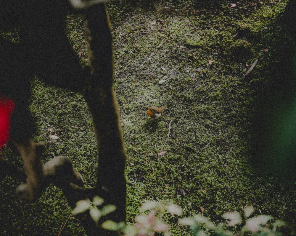 WA-Jardin-5294.jpg