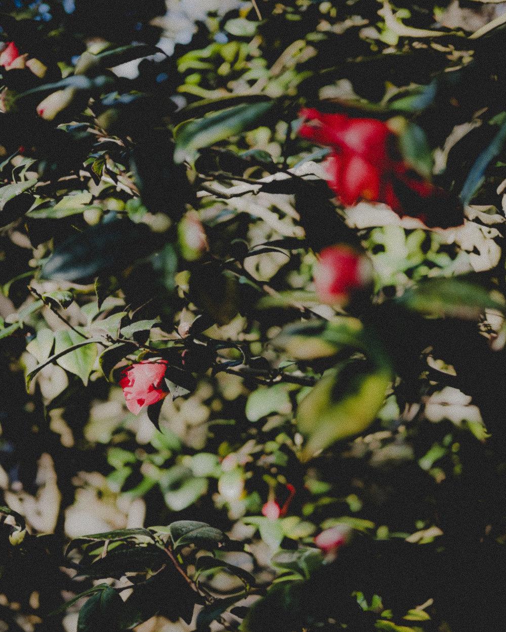 WA-Jardin-5198.jpg