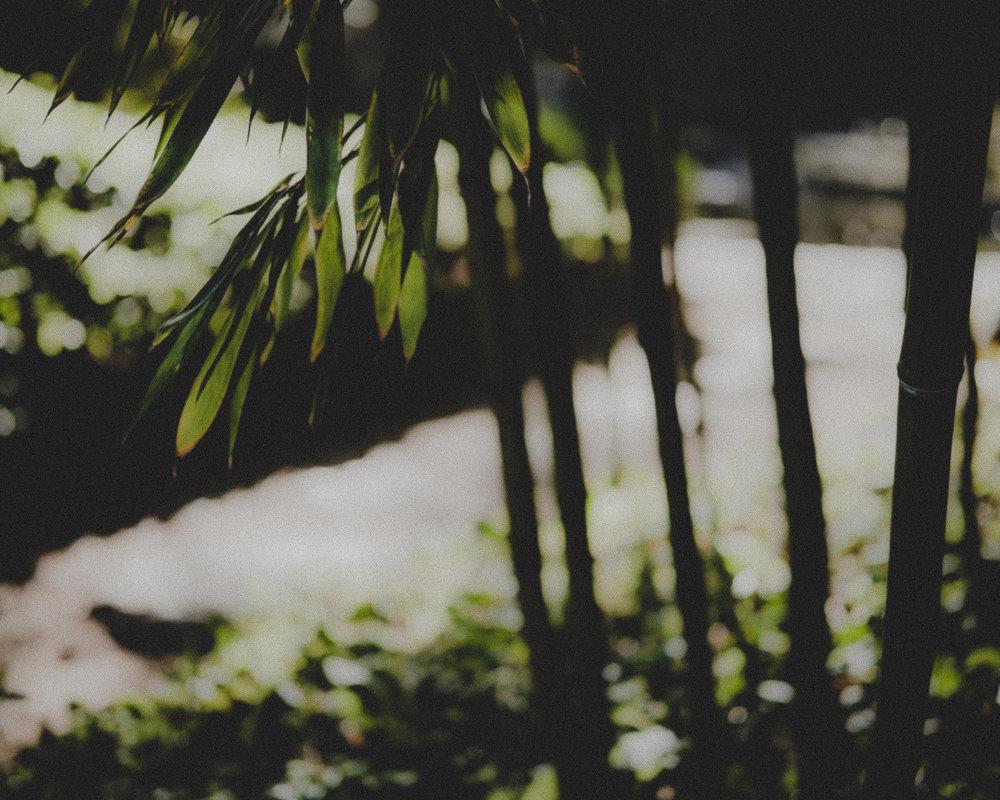 WA-Jardin-5228.jpg