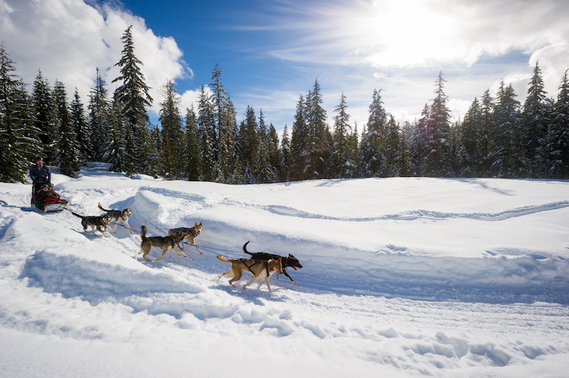 Things to do in Whistler Canada, Dog Sledding