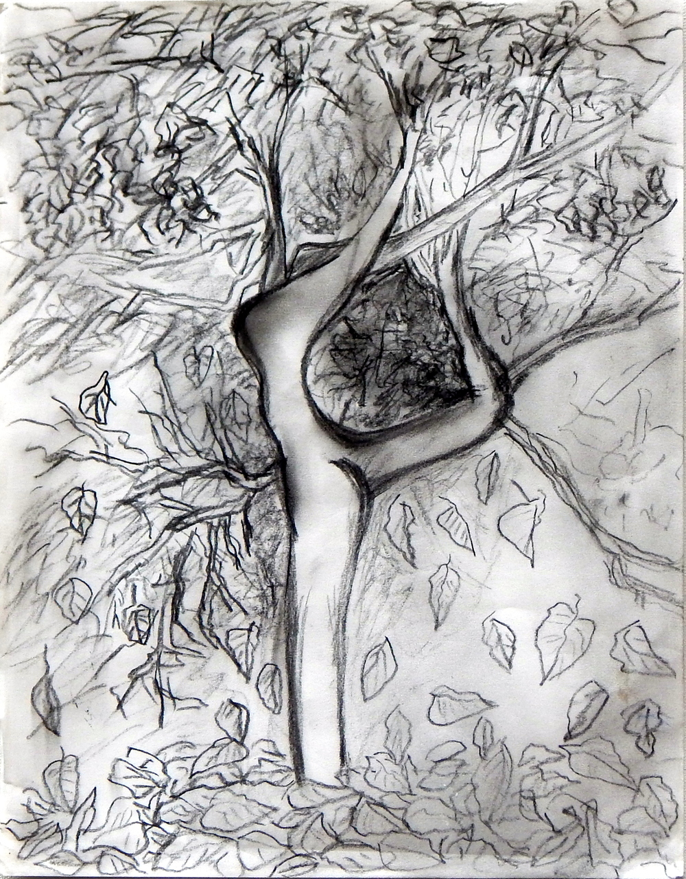 Tree, pencil and charcoal, 2012
