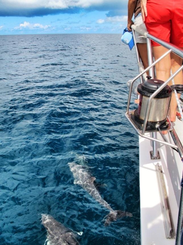 Pangaea Exploration dolphins.jpg