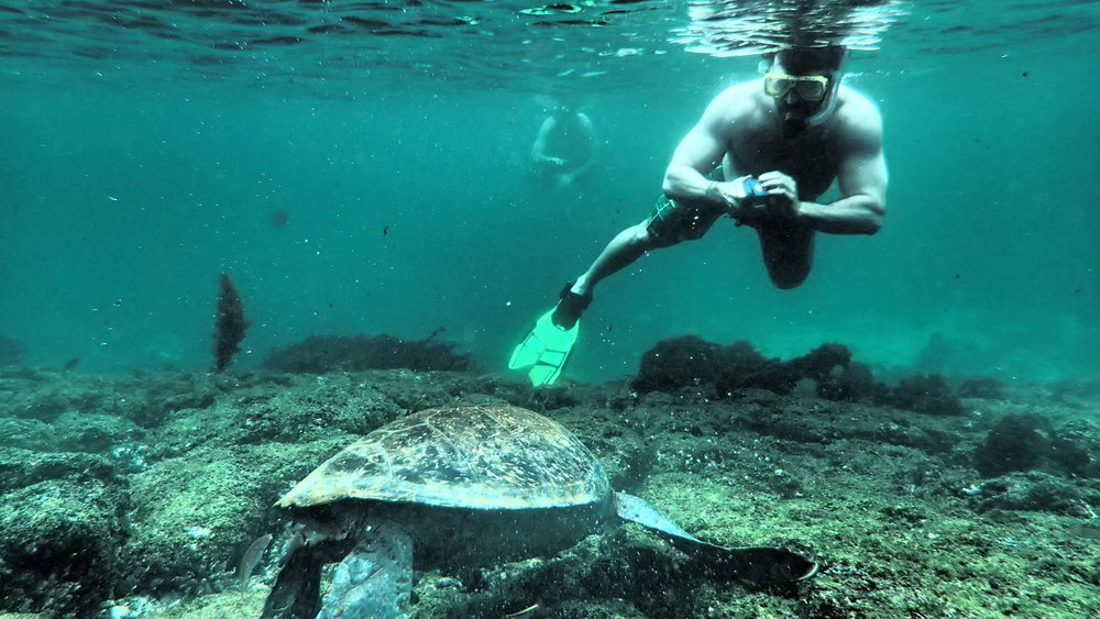 The Galapagos Islands snorkel