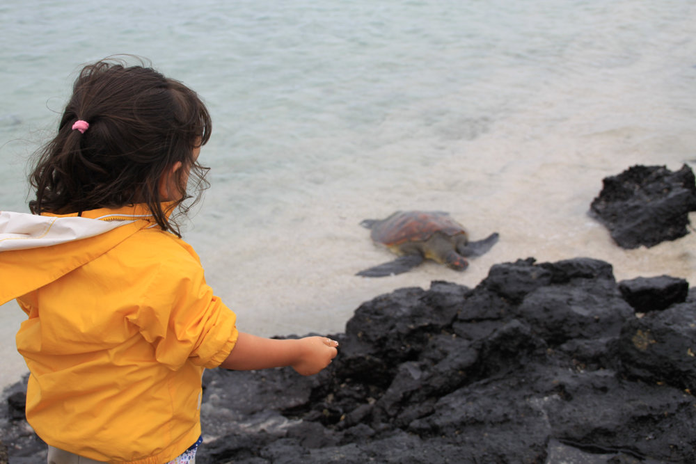 Galapagos Floreana Turtle & Girl Tropic IMG_9213.jpg
