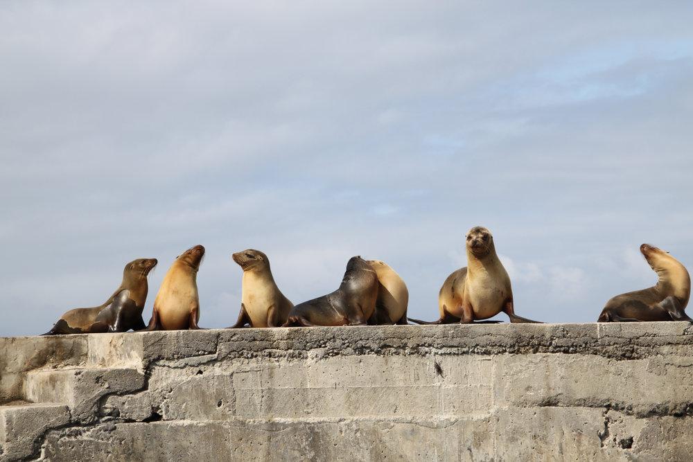 Galapagos Floreana Tropic Sea lion IMG_9247.jpg