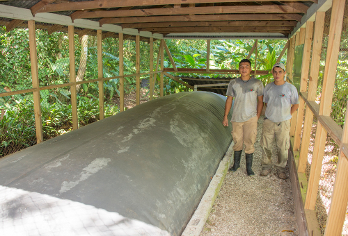 Biogas by Pigs on Lapa Rios Sustainability Tour