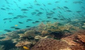 Nikoi-Island-Indonesia-marine-life.jpg