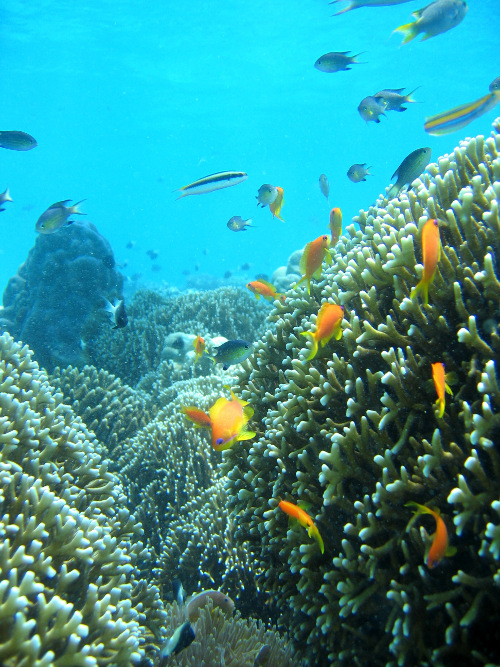 Chumbe Island Coral Park Reef : The world's first private marine protected area