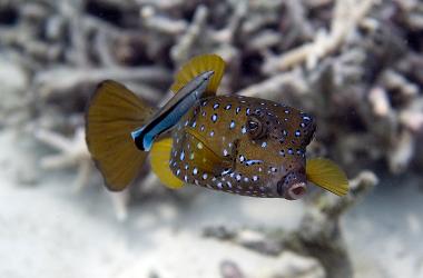 Marine conservation  -