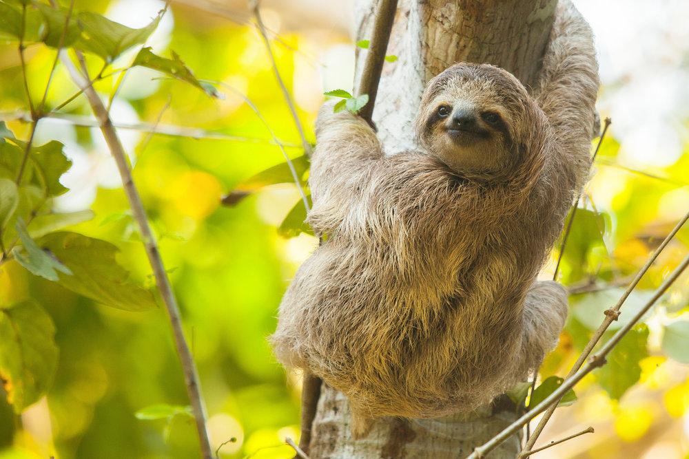 Biodiversity Ensures our survival providing food, fuel, shelter >>