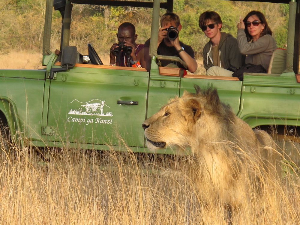 Game drive with Maasai guide watching lion