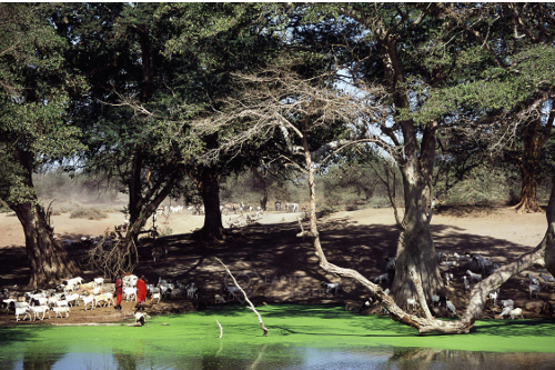 Maasai pastoralists Spring Maasai Wilderness Conservation trust Kenya