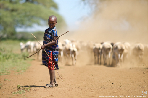 Maasai boy herder, mwct / campi ya kanzi Kenya
