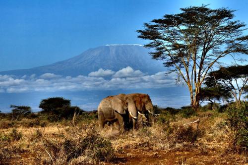 elephants at kilimanjaro - Campi ya Kanzi, Kenya - (c) Stefano-Motik