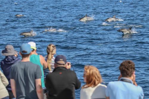 WCA Common dolphins New Zealand ©Auckland Whale & Dolphin Safari