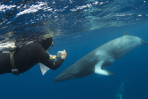 Dwarf minke whale research ©Eye to Eye Marine Encounters