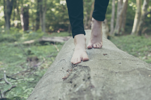 michal-parzuchowski-682447-bare-foot-tree-unsplash-500x333.jpg