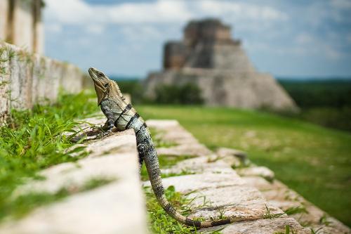marv-watson-559172-lizard-Uxmal-Yucatan-Ruinas-Mexico-unsplash-500x333.jpg