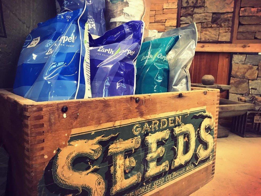 grass seed -