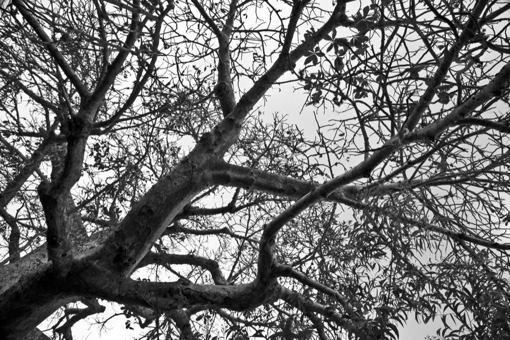 SB+lemures+saltantes_1000.jpg