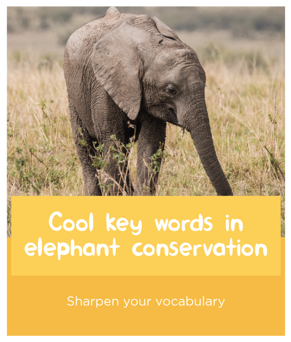 Elephant-keywords.jpg
