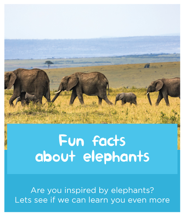 Fun-facts-about-elephant.jpg