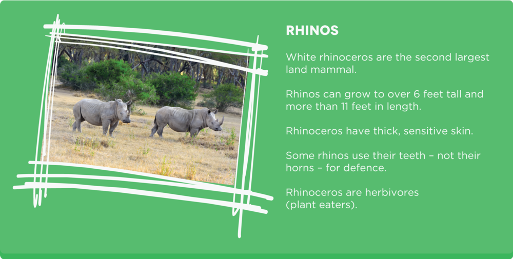 Rhino-facts.png