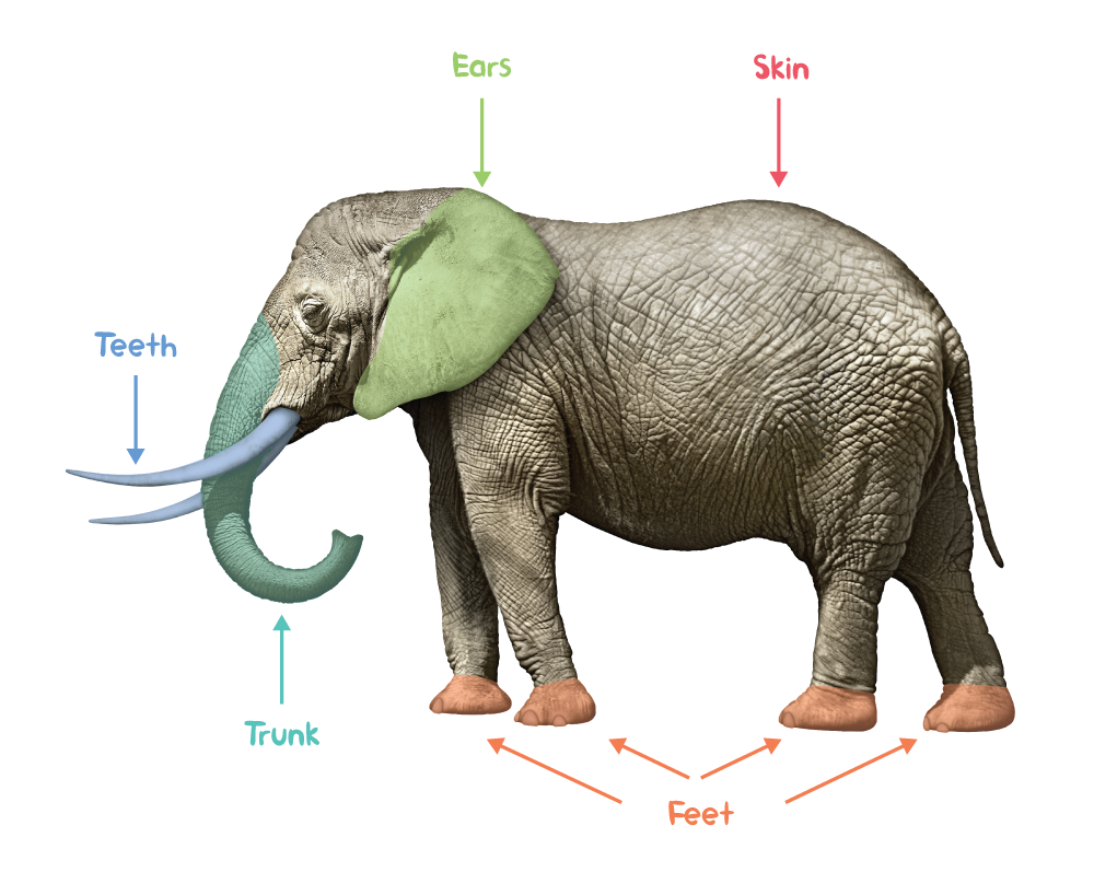 Fun facts about elephants — ERPKIDS.NGO