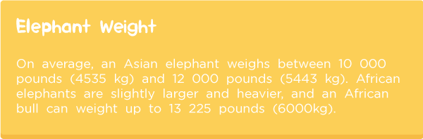Elephant-anatomy7.png