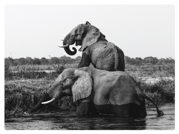 Elephant-anatomy14.jpg