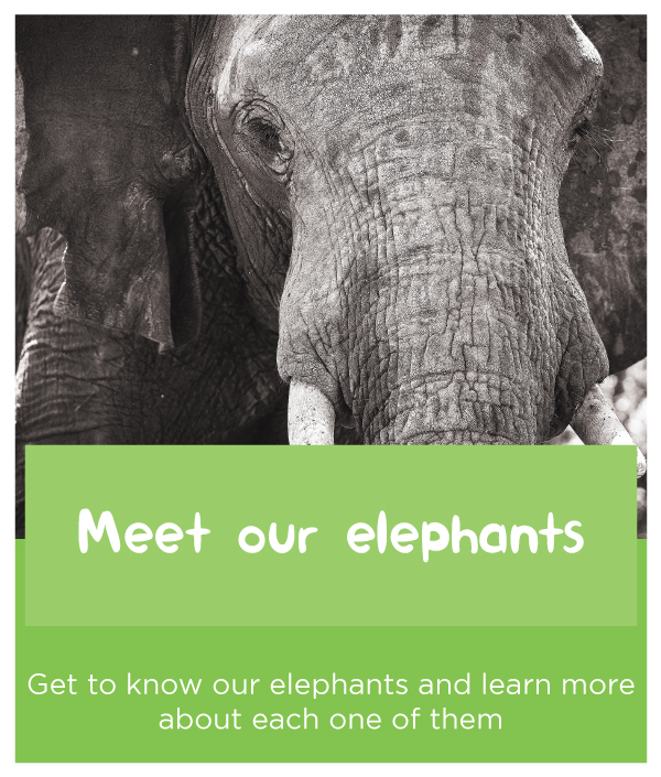 Meet-our-elephants.jpg